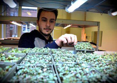 LoKali, première ferme urbaine de micro-pousses