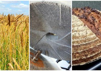 De la farine et du pain bio directement à la ferme