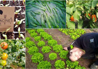 Un potager mandala en agroforesterie